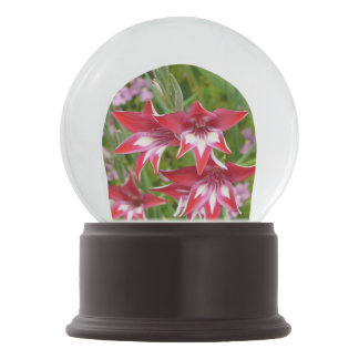 赤と白のGladiolasの夏の庭の花柄 スノーグローブ