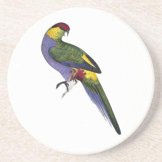 赤によっておおわれるインコのオウムの鳥 コースター