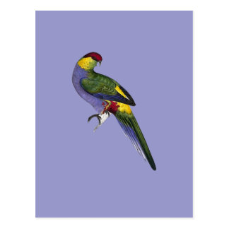 赤によっておおわれるインコのオウムの鳥 ポストカード