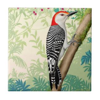 赤によって膨らまされるキツツキの野生の鳥のタイル タイル