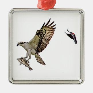 赤によって追跡されているミサゴによってはクロドリが飛びました メタルオーナメント