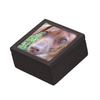 赤の希薄なダックスフントの子犬 ギフトボックス
