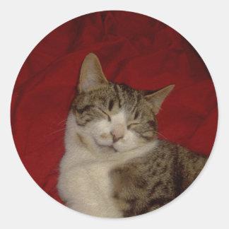 赤の灰色の子ネコ ラウンドシール