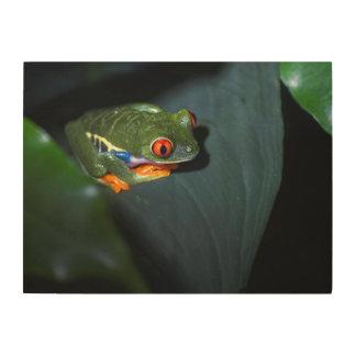 赤はカエルのモデルを注目します ウッドウォールアート