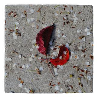 赤は白い花びらを残します トリベット