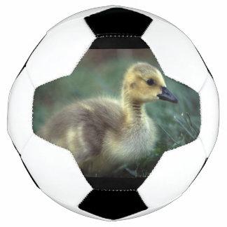 赤ん坊のガチョウ サッカーボール