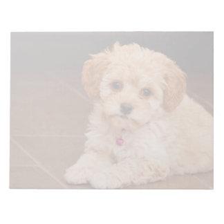 赤ん坊のマルタのプードルの組合せかmaltipooの小犬 ノートパッド