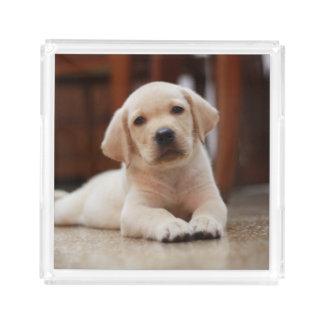 赤ん坊の腹に置いている黄色いラブラドールの小犬 アクリルトレー