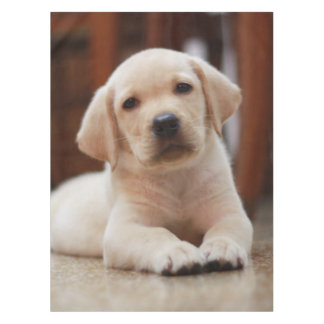 赤ん坊の腹に置いている黄色いラブラドールの小犬 テーブルクロス