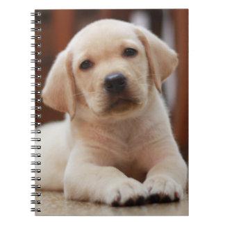 赤ん坊の腹に置いている黄色いラブラドールの小犬 ノートブック