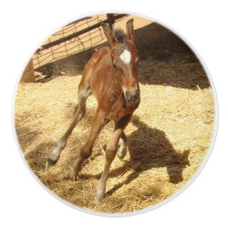 赤ん坊の馬の子馬の農場牧場動物のノブ セラミックノブ