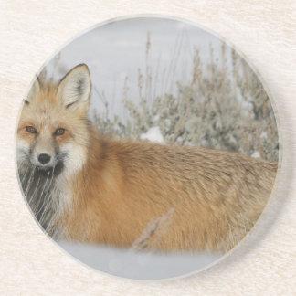赤キツネの野生動物のギフトのアイディア コースター