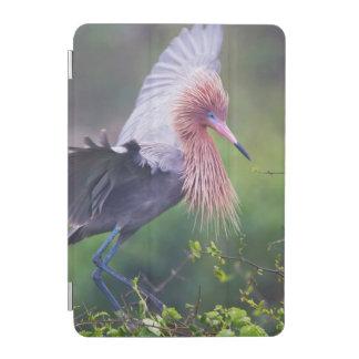 赤味がかった白鷺(Egretta Rufescens)の大人 iPad Miniカバー