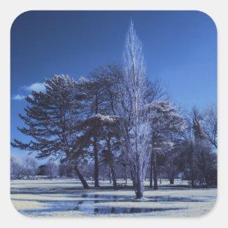 赤外線景色-公園の木 スクエアシール