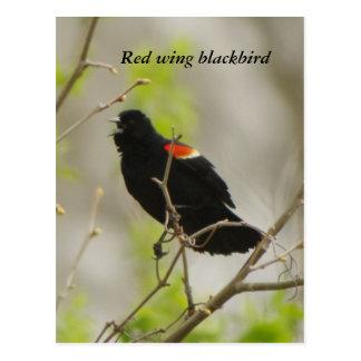 赤翼のクロドリ ポストカード