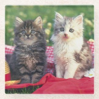 赤色の毛布に坐っている2匹の子ネコ ガラスコースター