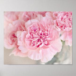 赤面のピンクのカーネーション ポスター