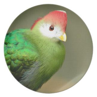 赤頂点に達されたエボシドリ科の鳥 プレート