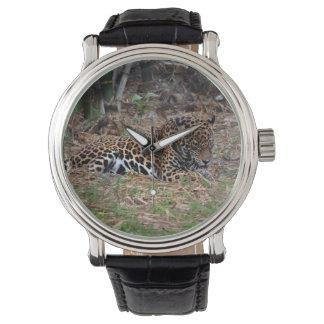 足を舐めているジャガーの大きな猫は動物の写真を冷却します 腕時計