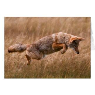 跳躍しているコヨーテ-テナガザル草原 グリーティングカード
