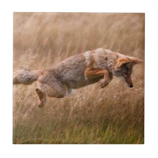 跳躍しているコヨーテ-テナガザル草原 タイル