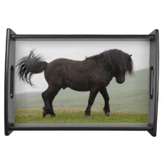 踊りのシェトランド諸島子馬の種馬の皿 トレー