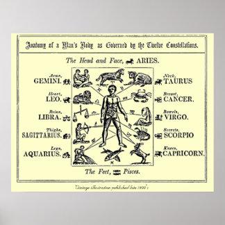 身体部分および占星術の関連付け ポスター