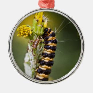 辰砂ガのオレンジStripeyの幼虫 メタルオーナメント