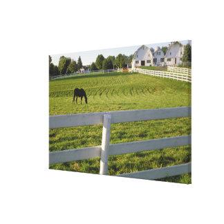農場で牧草を食べている馬 キャンバスプリント