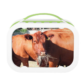 農場の牛食べ物の干し草 ランチボックス