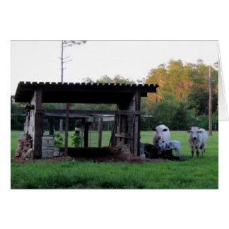 農場の生命(7326) -牛 カード