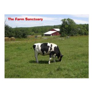 農場の聖域牛 ポストカード
