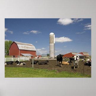 農場の赤い納屋そしてサイロの前の牛 ポスター
