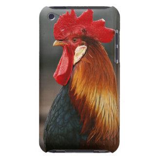 農場構内の国内オンドリ Case-Mate iPod TOUCH ケース