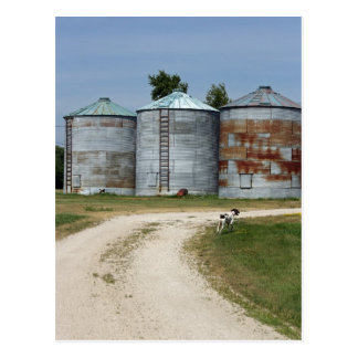 農場犬のサイロの郵便はがき ポストカード