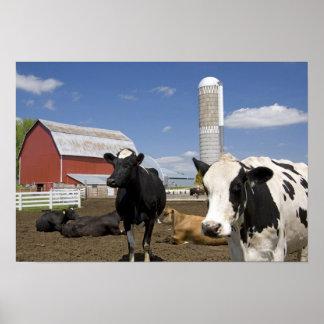 農場2の赤い納屋そしてサイロの前の牛 ポスター