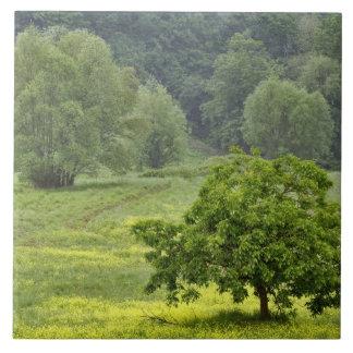 農業の圃場、タスカニー、2の独身のな木 タイル