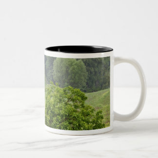 農業の圃場、タスカニー、2の独身のな木 ツートーンマグカップ