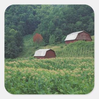 近の赤いタバコの納屋のタバコの穀物そして組 スクエアシール