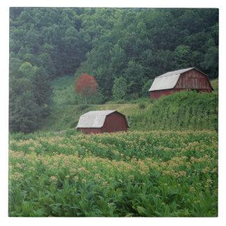 近の赤いタバコの納屋のタバコの穀物そして組 タイル