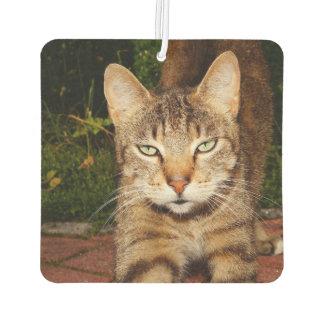 退屈させた子猫猫 カーエアーフレッシュナー