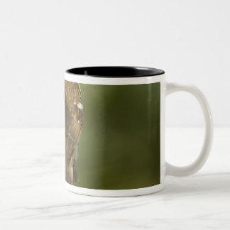 送り装置の女性)バラbreastedのgrosbeak、 ツートーンマグカップ