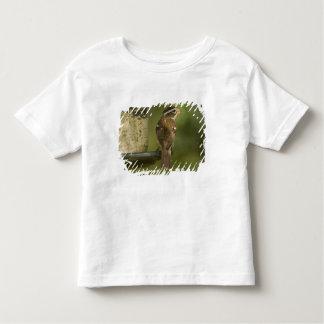 送り装置の女性)バラbreastedのgrosbeak、 トドラーTシャツ