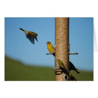 送り装置の鳥 カード