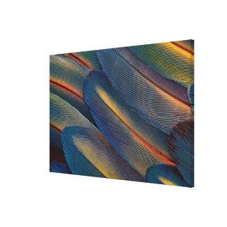 送風された深紅のコンゴウインコの羽 キャンバスプリント