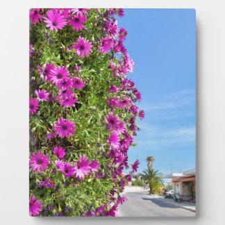 通りの近くの壁のぶら下がったなピンクのスペインのなデイジー フォトプラーク