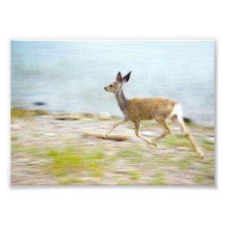 連続した子鹿の写真 フォトプリント