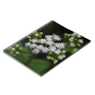 遅花盛りのBonesetの白い野生の花のノート ノートブック