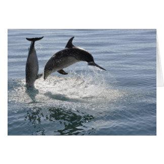 遊んでいるイルカの魚-空白のなカード カード