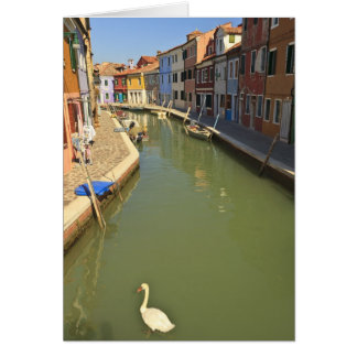運河、Buranoの島、ベニス、イタリアの白鳥 カード